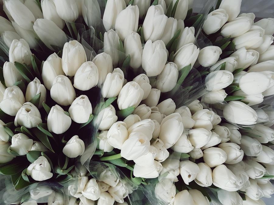 tulipanowe wesele